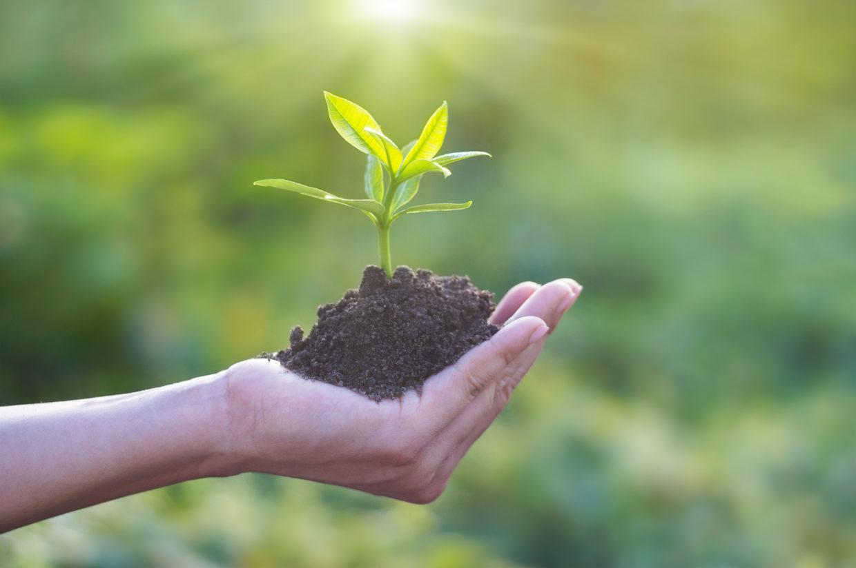 Développement durable plante